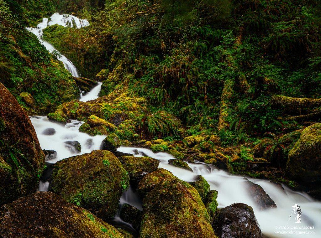 Quinault Cascades