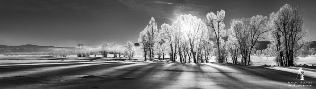 Morning Shadows in Winter B&W